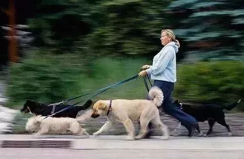 美国成功立法《禁食猫狗肉》,5只狗狗从中国去往美国寻找新的家庭