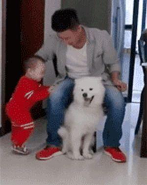 养了只吃醋狗是一种什么体验?它们就像一个小孩子