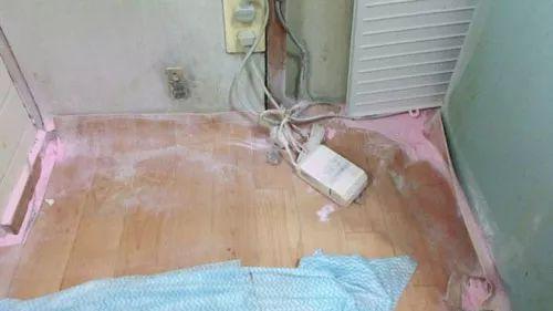 猫咪用灭火器把房间弄得一塌糊涂,主人要找它算账