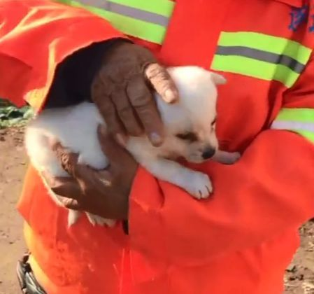 环卫工大叔抱着一只小奶狗,还掏出了十块钱:你可以收养它吗?