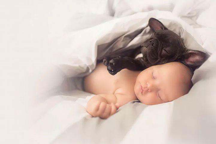 同一天出生的法国斗牛犬和小主人,镜头下记录的美好时光!