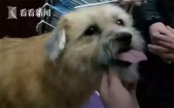 失联了8年的狗狗,与主人意外地重逢,这就是缘分!