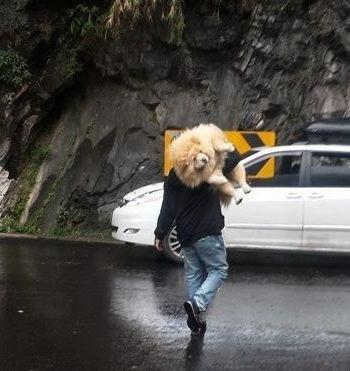 男人养狗的画风,原来和你想象的完全不同