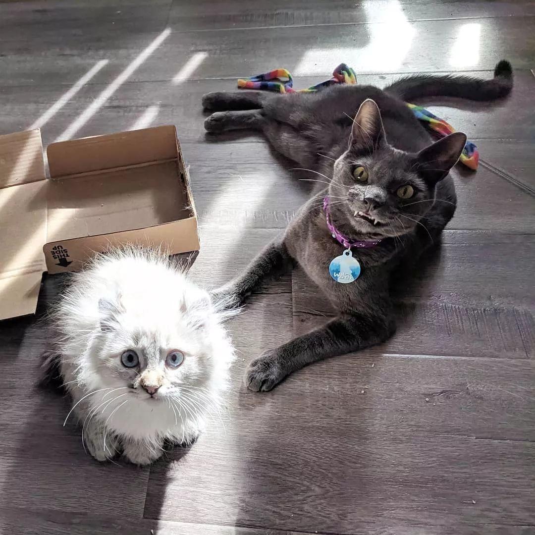 为了让收养的蓝猫更开心,竟然为它打造一座梦幻丛林