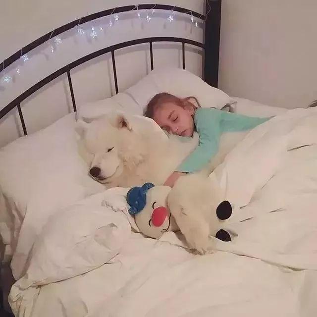到了冬天,狗狗的用处,终于被很多不养狗的人羡慕了!