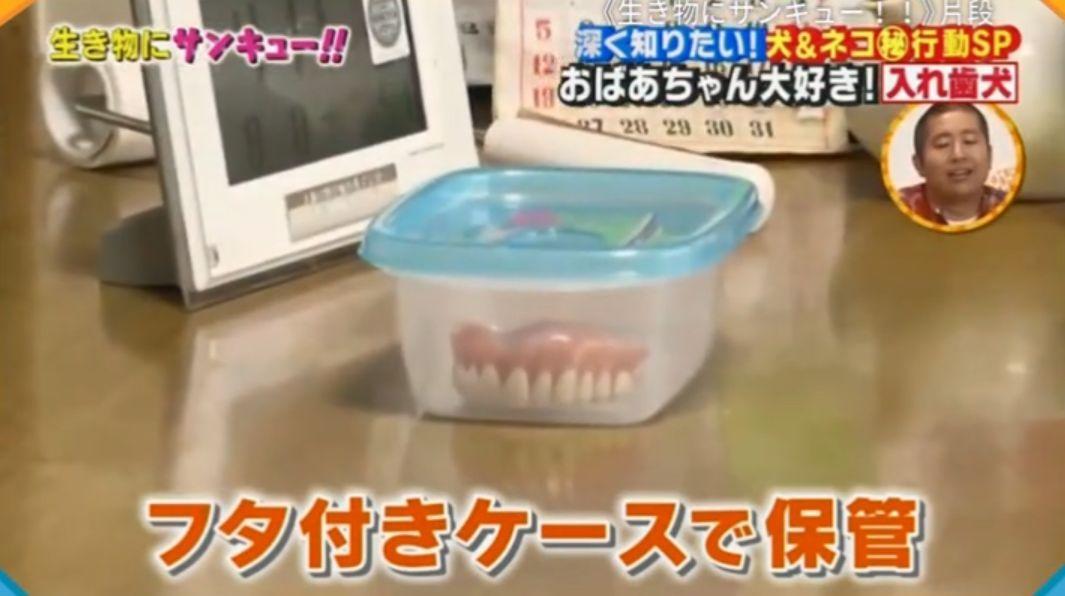 日本一只名叫Riku的泰迪狗狗,总是喜欢偷戴奶奶的假牙