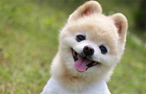 宠物小知识:俊介换牙会影响食欲吗,俊介换牙影响食欲怎么办