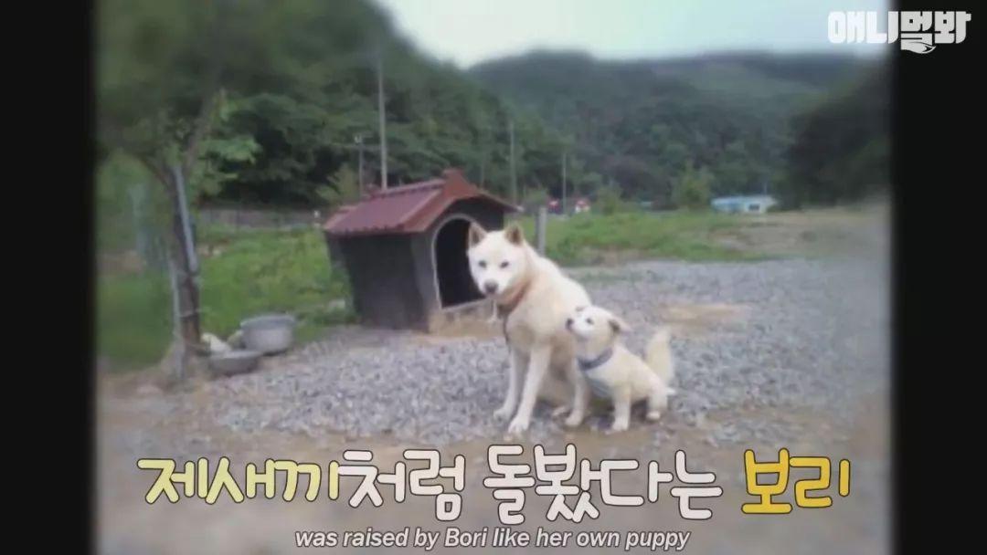 """韩国一位大叔自带""""招狗""""体质,却无法赢得自家狗狗的心"""