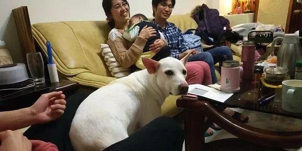 家里的狗砸超爱吃醋,主人想抱一下小宝宝,狗狗半路拦下