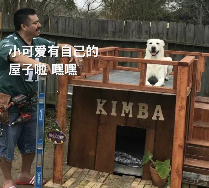 """五年前""""不准养狗""""的老爸,已经为狗子打造了一个豪宅"""