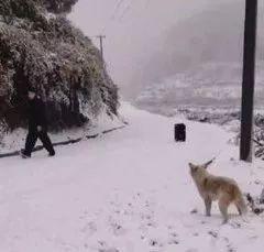 果然人要是发疯起来,连狗砸都怕啊!