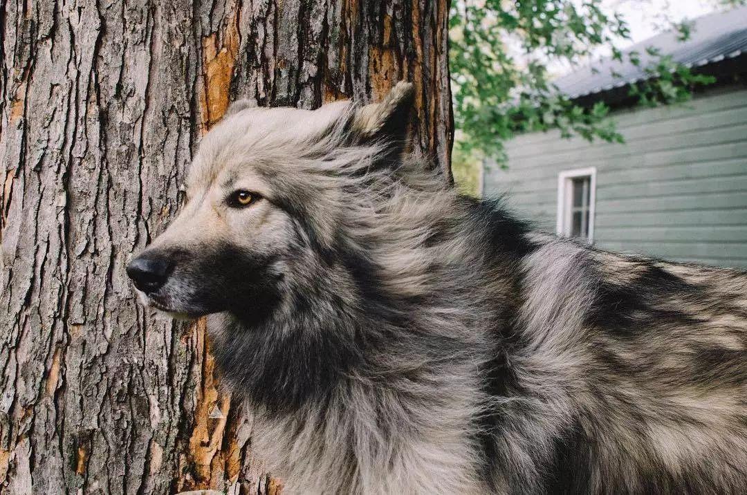 """长得很有""""武侠范""""的狗狗,你们来看一下?"""
