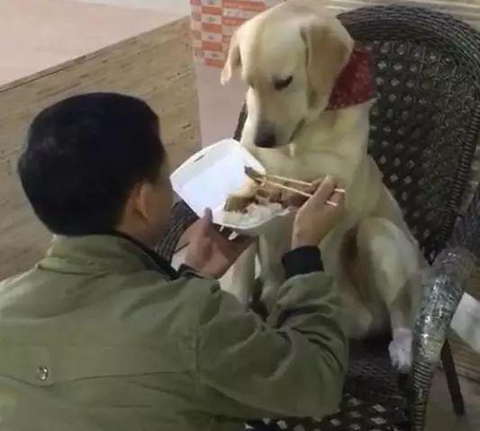你有过哄狗狗吃饭的经历吗?就像哄小孩一样