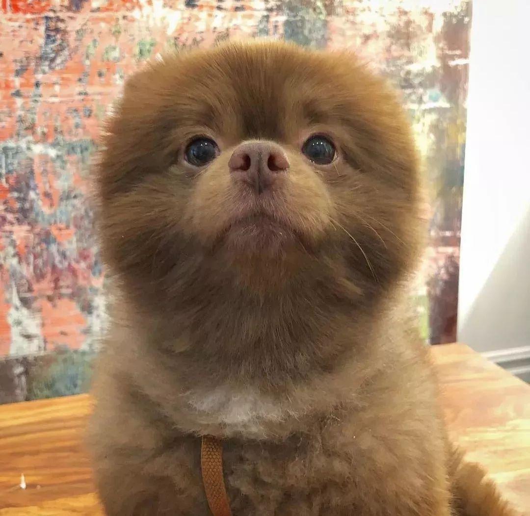 狗子洗澡时的样子,有的很搞笑,最后的金毛太乖巧了