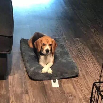 2018年网络上一些让人记忆深刻的狗狗,你认识几只?