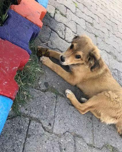 """网友在土耳其旅游,""""那里的流浪狗,见人就躺下求摸摸!"""""""