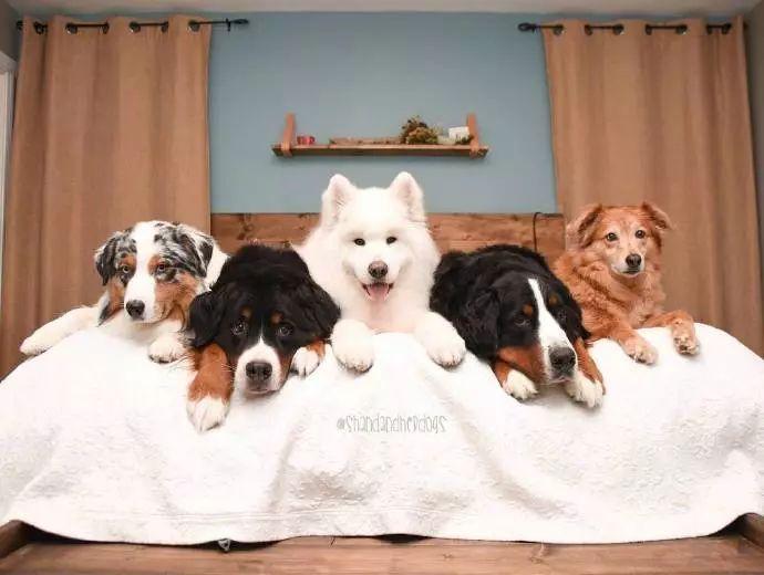 """狗狗很难理解""""同伴去世"""",它们的有些举动让人感到悲伤"""