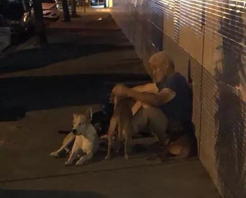 巴西6只狗狗跟着救护车去医院,守在医院院门口,等一位流浪汉