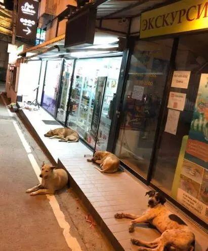 为了让更多人接受流浪狗,泰国政府想出了这样一个办法!