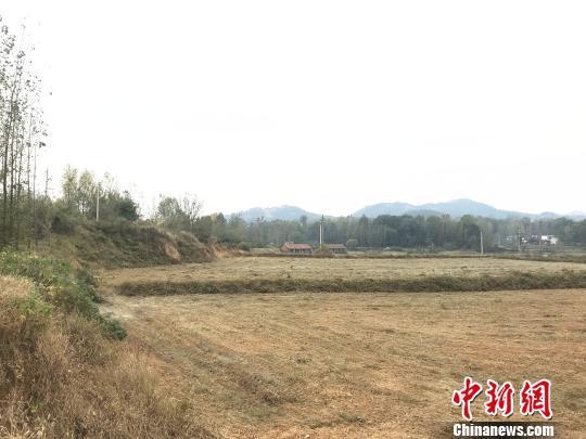 河南省2019年第一批復墾券交易3.8億元_2019年春節聯歡晚會