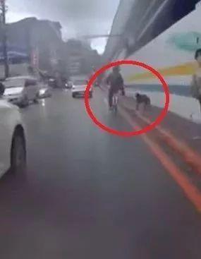 骑单车踹路边流浪狗,结果下一秒就现世报