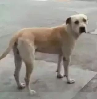 加油站收留了一只流浪狗,两年后,它会用这样的方式报恩!