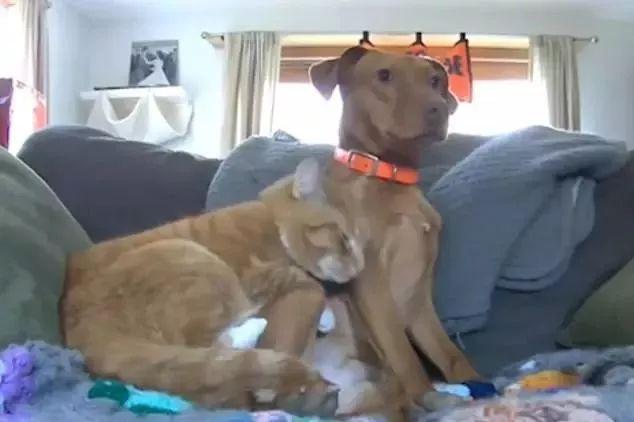 狗狗与猫咪相依相伴,后来,狗狗去世了
