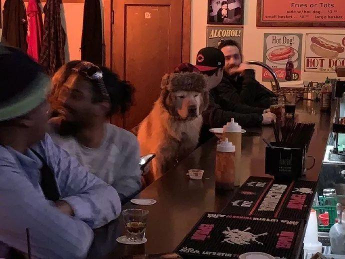 """去酒吧喝酒,竟遇到一只大金毛在""""买醉"""""""