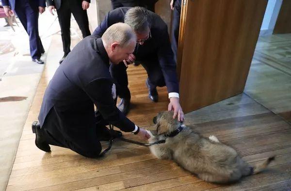 """普京又有狗啦:半跪着摸头,还喊它""""帅哥"""""""