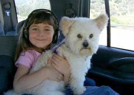"""小主人陪伴18岁狗狗度过生命的最后一天,""""就让我送它离开…"""""""