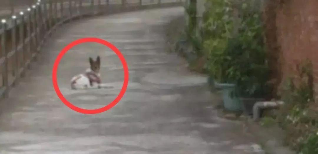 街景地图上意外看到自家狗狗...原来,你一直都没有离开.