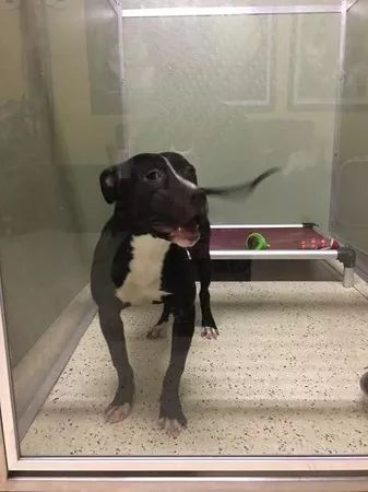 7个月大的小狗安乐死后竟奇迹生还,兽医被感动不忍补针.