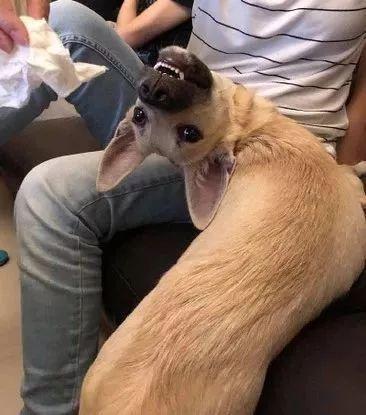 铲屎官怀疑家里的狗狗是液体做的,网友也被惊呆了