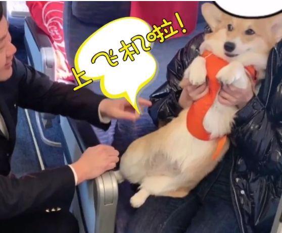 乘坐南方航空时看到一条狗,原来有些狗可以在国内坐飞机!
