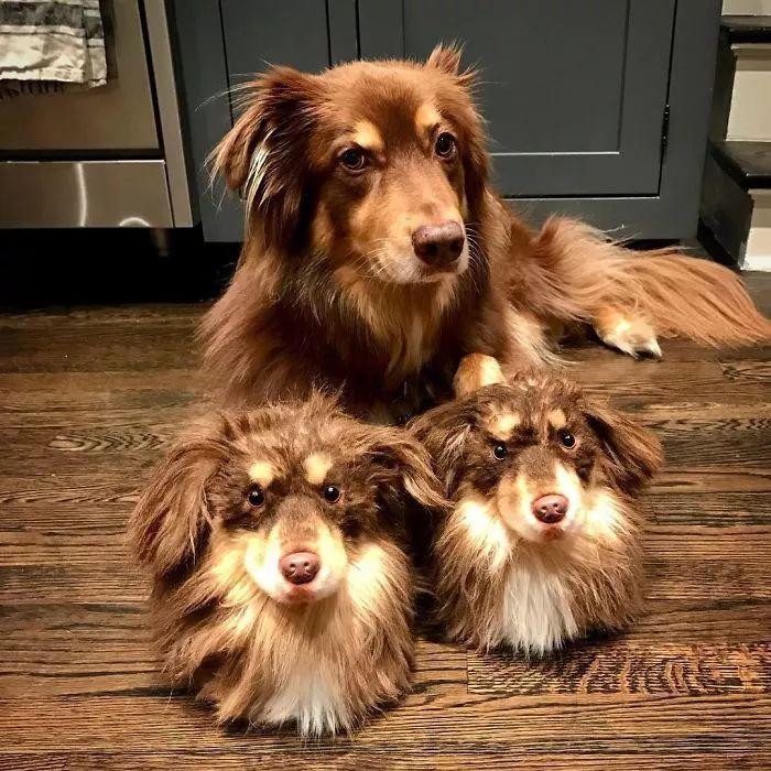 国外一家公司挺有创意,用狗狗的毛发,帮主人订做玩具