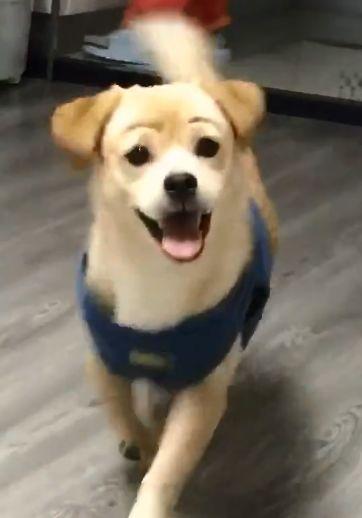 狗狗很开心地跑过来,主人却被它的眉毛逗乐了,还吓到它