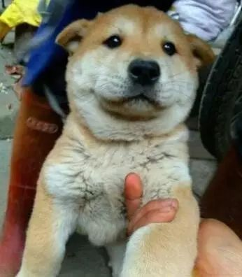 它是一只长相普通的小土狗,却是我心中的无价之宝
