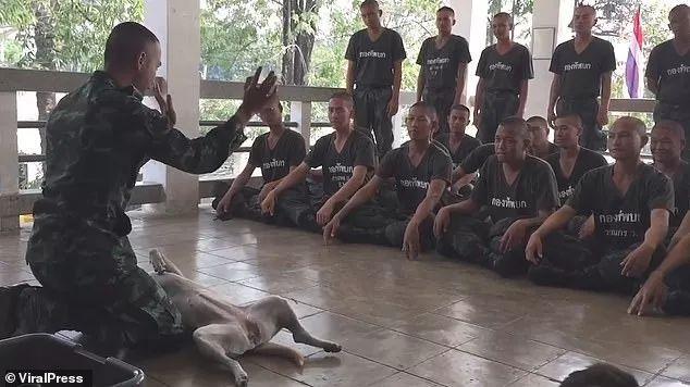 泰国军官为学生做心肺复苏演示,用一条狗做模型
