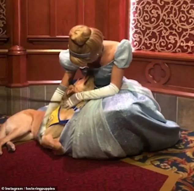 """狗狗对""""灰姑娘""""一见钟情,赖在人家裙子上不肯走"""