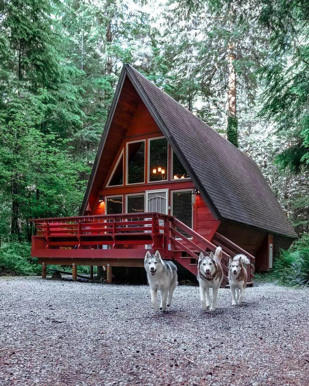 带着三只哈士奇住进了林中木屋