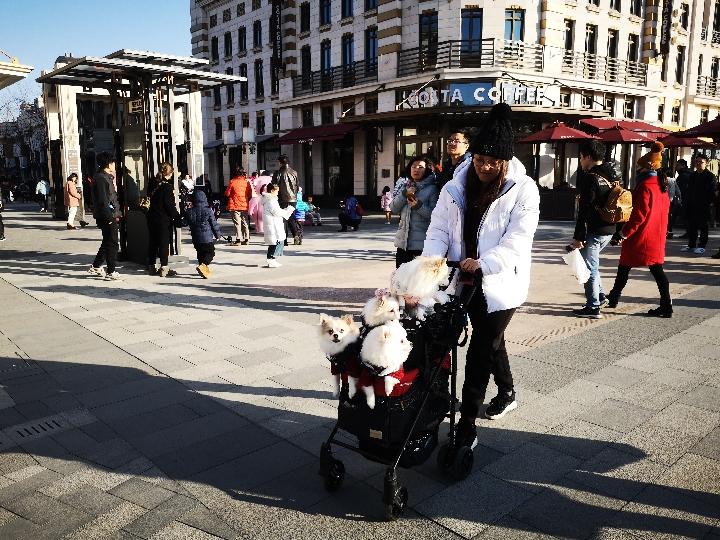 越来越多的宠物,也开始加入中国春运的行列