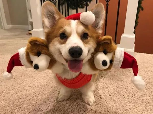 这难道就是传说中的地狱三头恶犬?