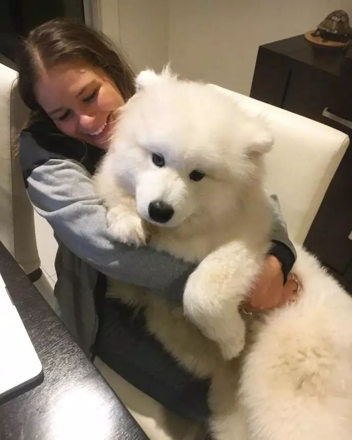 狗狗小时候不要总抱它,不然它会以为自己是长在你身上的!
