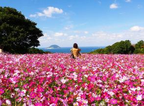 日本九州旅游攻略带你玩转九州七县