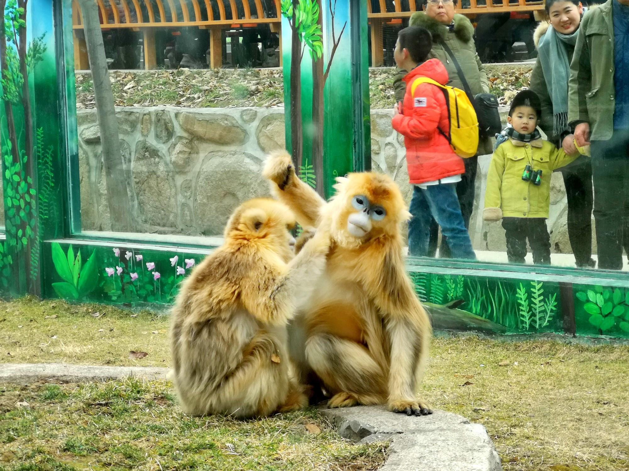 秦岭山下遇到面似魈魁的这个动物