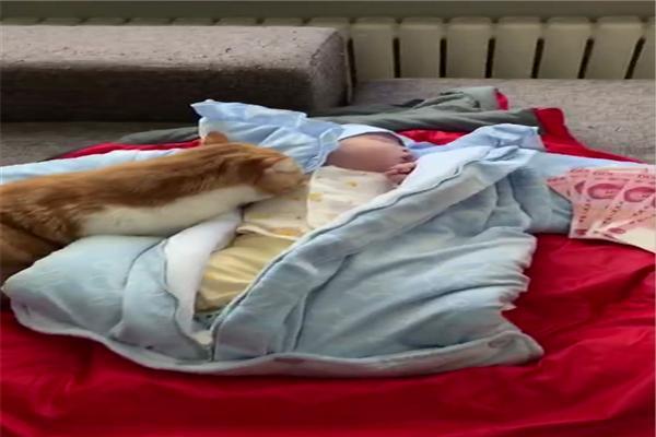 原創加菲貓看到頭香上熟睡的小主人,小心翼翼地在旁邊觀望著,好溫馨