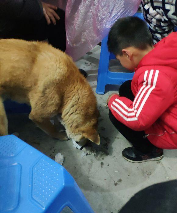 家人围坐在一起吃饭,一只流浪狗跑了进来,儿子就不吃饭了