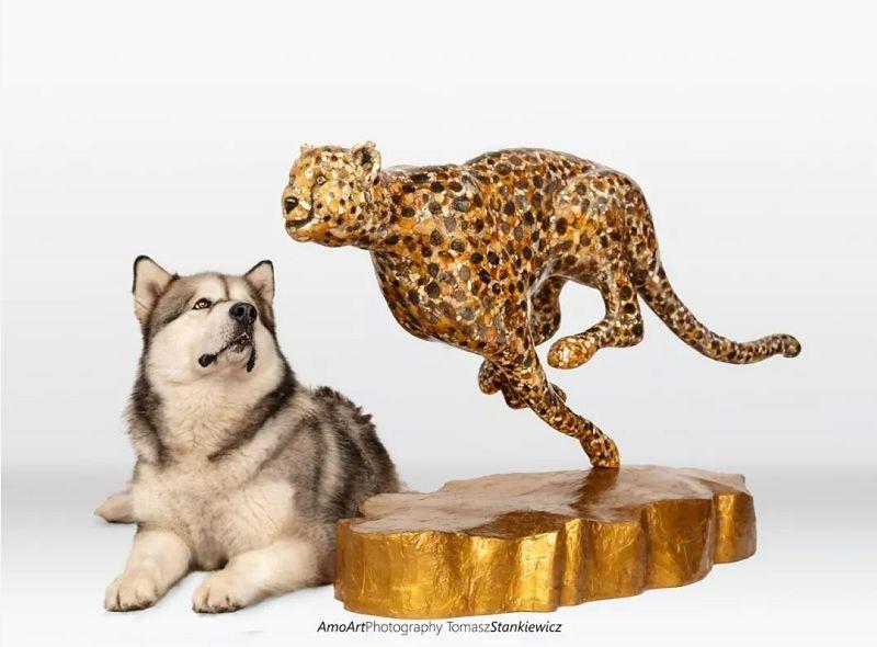 狗与琥珀猎豹对比