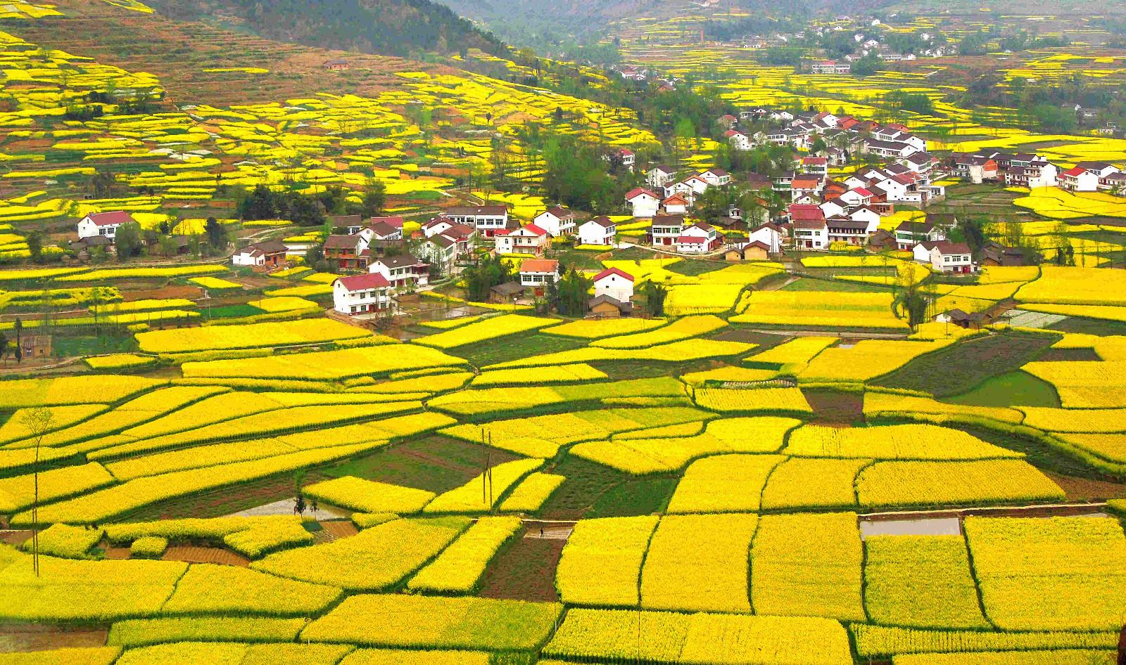 相约花海汉中 情醉汉人老家 ——2019中国最美油菜花海汉中旅游文化节即将开幕