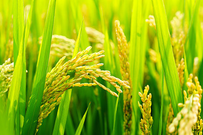 农作物种植APP开发方案